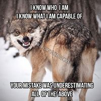 Only when provoked does it get ugly. But don't underestimate the cunning, intelligence, ability, loyalty of these animals under times of not being provoked. Wolf Qoutes, Lone Wolf Quotes, Great Quotes, Quotes To Live By, Me Quotes, Inspirational Quotes, Joker Quotes, Wolf Spirit, My Spirit Animal
