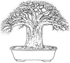 Baobab style bonsai tree