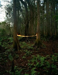 Magical Photos of the Mysterious Woods - My Modern Metropolis
