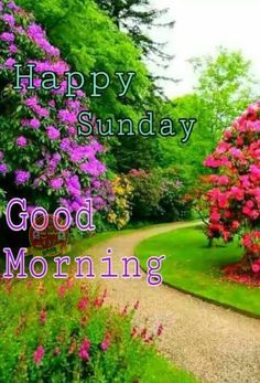 Happy Sunday Images, Good Morning Sunday Images, Happy Good Morning Quotes, Sunday Morning Quotes, Latest Good Morning Images, Good Morning Images Flowers, Good Morning Beautiful Images, Good Morning Picture, Good Morning Greetings