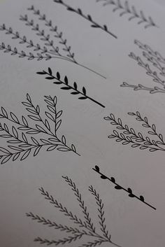 really like the technique within these illustrations of herb leaves. Very simple but effective on the eye. The simple beauty of handrawn technique reflects the true shapes and dimensions of the plants. The organic lines being relfected - cool idea to relfect and develop into an overall print pattern wrapping around the package.