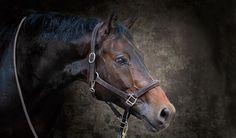 cheval portrait photo
