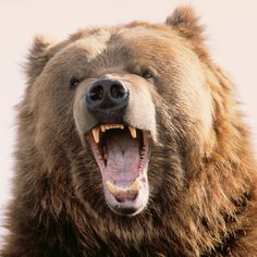 A Canadian Man Survived a Bear Attack with a Wine Bottle | FWx