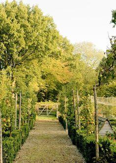 Farm:  #Vegetable #garden.