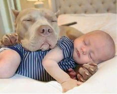 DM us Pitbull pictures for Feature! Dogs And Kids, Animals For Kids, I Love Dogs, Animals And Pets, Cute Funny Animals, Cute Baby Animals, Beautiful Dogs, Animals Beautiful, Cute Puppies