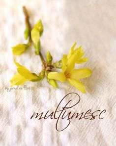#multumesc lista #Jurnalcuflori: Blogurile pe care le urmaresc Flower Qoutes, Violet Plant, Thanks Card, Projects To Try, Thankful, Cards, Bible, Thinking About You, Easter Activities