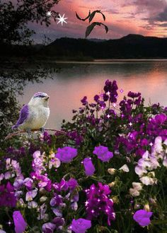 """Spring is nature's way of saying """"Let's Party!"""" Robin Williams"""
