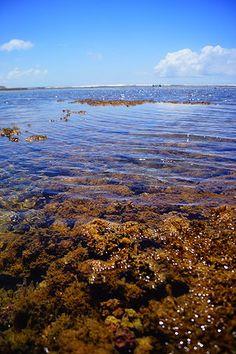 Praia do Lord em Praia do Forte, Bahia.