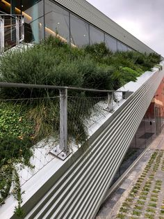 Pridham Hall - Snohetta Architects / Adelaide — STUDIOPHAM. Roof Gardens, Architects, Australia, Rooftop Gardens, Architecture