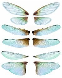 OOAK Artist Emporium - Fairy Wing Prints, many wonderful choices for wings! Dragonfly Wings, Butterfly Wings, Diy Wings, Paperclay, Doll Tutorial, Vintage Paper Dolls, Fairy Art, Fairy Dolls, Resin Crafts