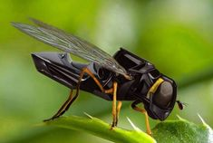 La abeja robótica es capaz de encontrar una flor, recoger su polen con una especie de plumero y transferirlo.