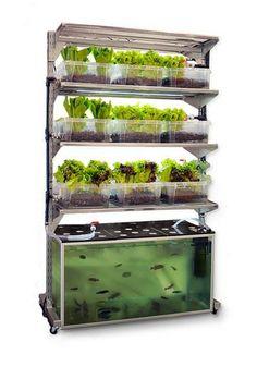 Los sorprendentes beneficios de un jardín en casa con el sistema orgánico de Acuaponia.