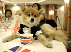 Winter Woofstock launches with a holiday high tea at The Fairmont Royal York Hotel - Shedoesthecity York Hotels, High Tea, Mans Best Friend, Yorkie, Holiday Fun, Your Dog, Product Launch, Teas, Animal Kingdom