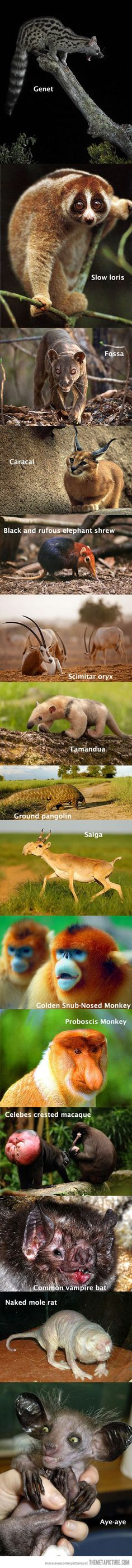 Animals that you rarely get to see…
