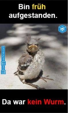 Funny pictures Good morning - The early bird catches the worm - Tier Witze - Lustige Tiere - humor Funny Animal Quotes, Funny Animal Pictures, Funny Animals, Cute Animals, Hilarious Animal Memes, Bird Pictures, Animal Humor, Animal Sayings, Angry Animals