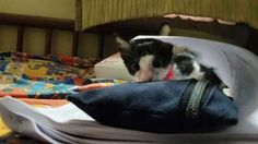 Am happy! I just created a profile for my pet on Furpurr. It's awesome. Check it out