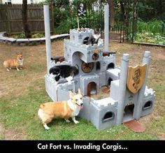 Cat Fort Vs. Invading Corgis...