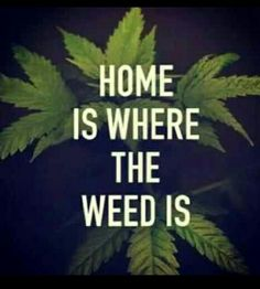 Online Weed Supply is a fast and discreet place to Buy Marijuana/ Buy weed /Buy cannabis at affordable prices within USA and out of USA.Get the best with us as your satisfaction is our priority Visit onlineweedsupply.com for more or call and text +19515345163 .We are available 24/7
