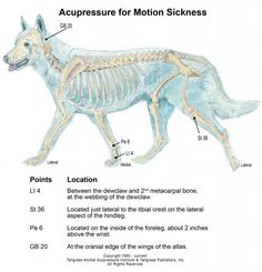 Animal Acupressure and canine acupressure motion sickness chart
