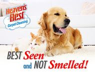 Heaven's Best is good at getting pet smells out of your carpet. Give us a call today. You will be glad you did. 317-893-5678 or 812-592-6764