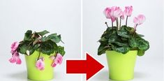 Bring Your Wilted Flowers Back To Life With Only Three Ingredients The Plant Guide Çocuk Odası Potted Plants, Indoor Plants, Wilted Flowers, Flower Pot Design, Plant Lighting, Plant Guide, Hardy Plants, Plant Needs, Plantar