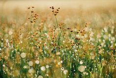 Picalls.com   Wildflowers by Aaron Burden.