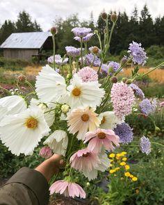 Floral Flowers, Wild Flowers, My Secret Garden, Pink Lemonade, Siri, Harvest, Bloom, Simple, Plants