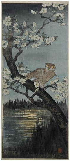 Narazaki Eisho: Owl and Cherry - Japanese Art Open Database