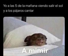 Funny Spanish Memes, Funny Relatable Memes, Funny Posts, Spanish Humor, Funny Humor, Stupid Memes, Stupid Funny, Hilarious, Seriously Funny