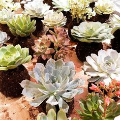 Behind the scenes. Moss Garden, Garden S, Echeveria, Art Forms, Bonsai, Phoenix, Behind The Scenes, Cactus, Planter Pots