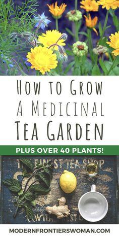 How to Grow a Medicinal Tea Garden (Plus over 40 Plants! Healing Herbs, Medicinal Plants, Herb Garden, Garden Plants, Herb Plants, Permaculture, Making Herbal Tea, Tea Plant, Growing Herbs
