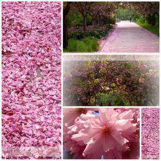 Blütenmeer im Botanischen Garten Rostock