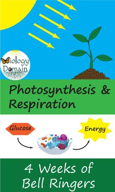 Four weeks of Photosynthesis and Cell Respiration Bellringers with handouts for student answers! Cell Respiration, Photosynthesis And Cellular Respiration, Writing Strategies, Teaching Strategies, Science For Kids, Life Science, Teaching Philosophy, First Year Teaching, High School Biology