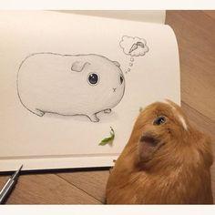cute guinea pig sketch