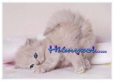 cute kittens and puppies Cute Kittens, Kittens And Puppies, Cats And Kittens, Kitten Love, I Love Cats, Crazy Cats, Gray Kitten, Pretty Cats, Beautiful Cats