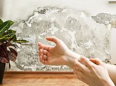 Common Mold And Black Mold Allergic Reactions Every Homeowner Should Know About http://moldremovalinhome.com/common-mold-and-black-mold-allergic-reactions-every-homeowner-should-know-about/