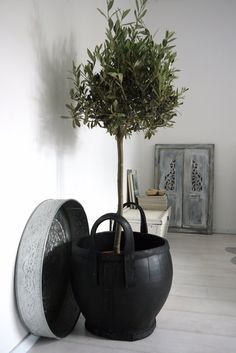 Olive tree and silver plate from Desiree...