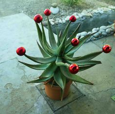 "Karoo Christmas - This Christmas ""tree"" makes me smile! Summer Christmas, Tropical Christmas, Natural Christmas, Nordic Christmas, Modern Christmas, Christmas Love, Christmas Ornaments, Christmas In South Africa, African Christmas"