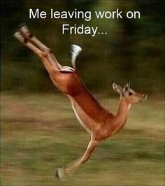 To picdump leaving work on friday, spring girl, friday meme, bestfrien Friday Quotes Humor, Funny Friday Memes, Funny Quotes, Friday Funnies, Funny Humour, Funny Memes, Qoutes, Tgif, Charlie Brown