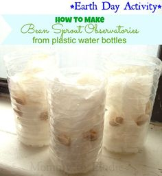 Perfect Earth Day Craft and Activity for kids! How to make Bean Sprout Observatories out of water bottles Earth Day Activities, Summer Activities For Kids, Science For Kids, Science Activities, Crafts For Kids, How To Make Beans, Save The World, Emergent Curriculum, Earth Day Crafts