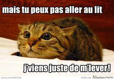 La vie de ptit chat … ♥