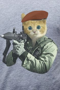 1000 Images About Cats With Guns On Pinterest Guns