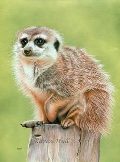 Wildlife and birds - art featuring a range of wildlife and birds by Karen Hull