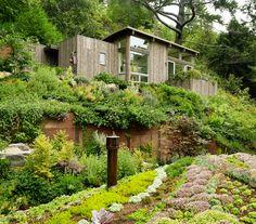 Mill Valley Cabins blend into the forest canopy #architecture #environnement #écologique #durable #bois #maison #hqe #bbc