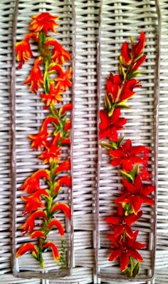 Wiconia 2x9 Oil on glass, $35 choice or orange or red. Hangs by silver filament. Beautiful in window or on wall.