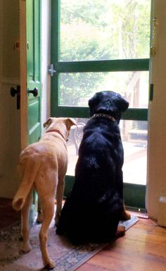 Farm dogs waiting for the cows to come home...