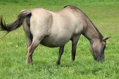 Caring for a horse is no easy task. And one of the most difficult times for the owner and the horse alike is during pregnancy. Scroll below to learn how to take care of a pregnant horse. Pregnant Horse, Pregnant Mom, Mare Horse, Arabian Horses, Pregnancy Stages, Horse Breeds, Horse Care, The Ranch, Take Care Of Yourself