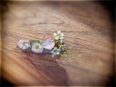 Stud Earrings, Jewelry, Fashion, Floral, Jewellery Making, Moda, Ear Studs, Jewelery, Jewlery