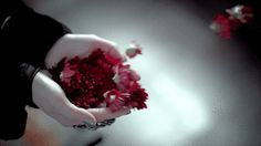 The perfect Beautiful Flowers Windy Animated GIF for your conversation. Discover and Share the best GIFs on Tenor. Writing Inspiration, Character Inspiration, Wind Charm, Cinemagraph, Aesthetic Gif, Rocky Horror, Gone With The Wind, Moving Pictures, Witchcraft
