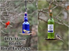 Diy : Wine Bottle Bird-feeders